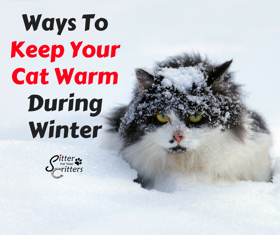 How To Keep Your Cat Warm Sitter For Your Critters