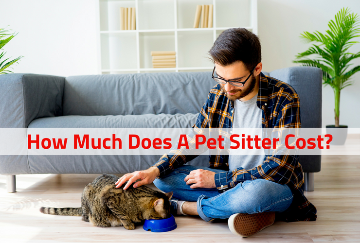 how much does a pet sitter cost in chico california prices rates sitter for your critters. Black Bedroom Furniture Sets. Home Design Ideas