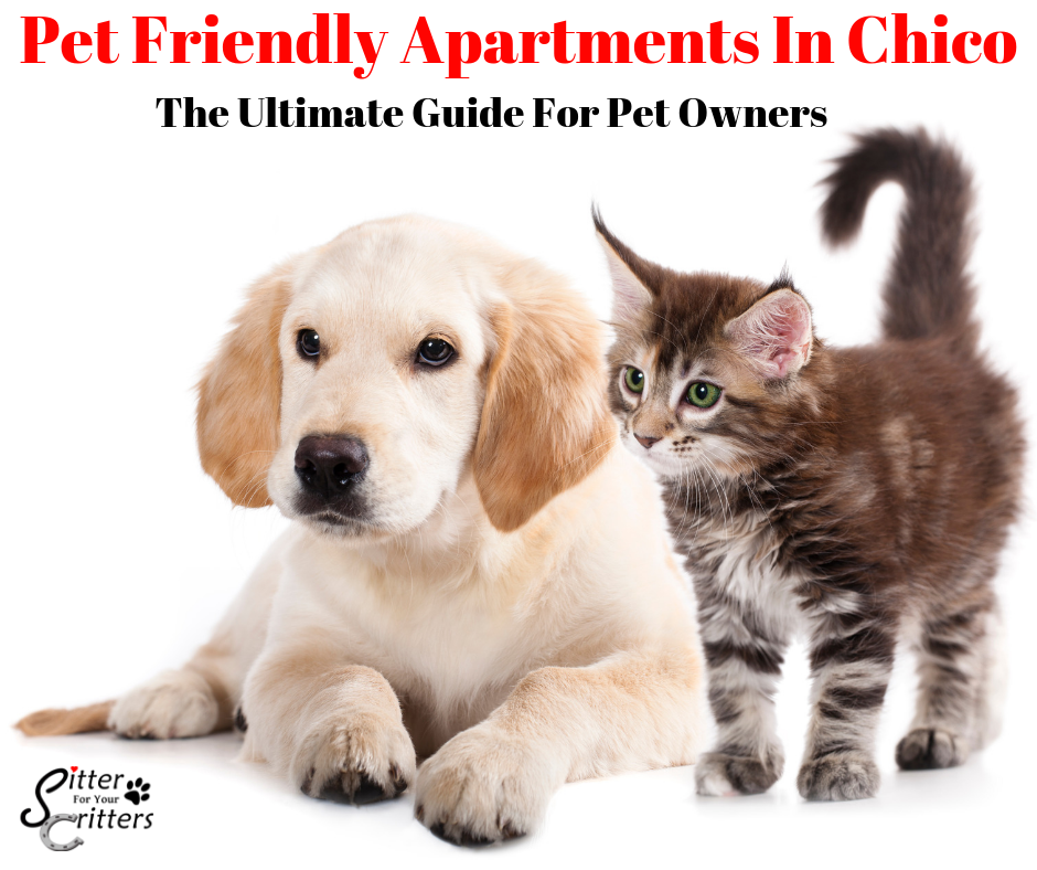 Pet Friendly Chico Apartments: The Ultimate Guide For Pet